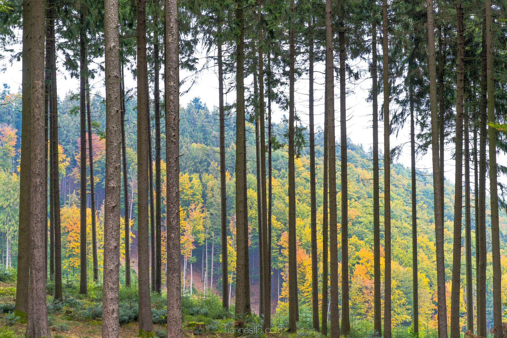 Nieuwe regeling op komst over bomen